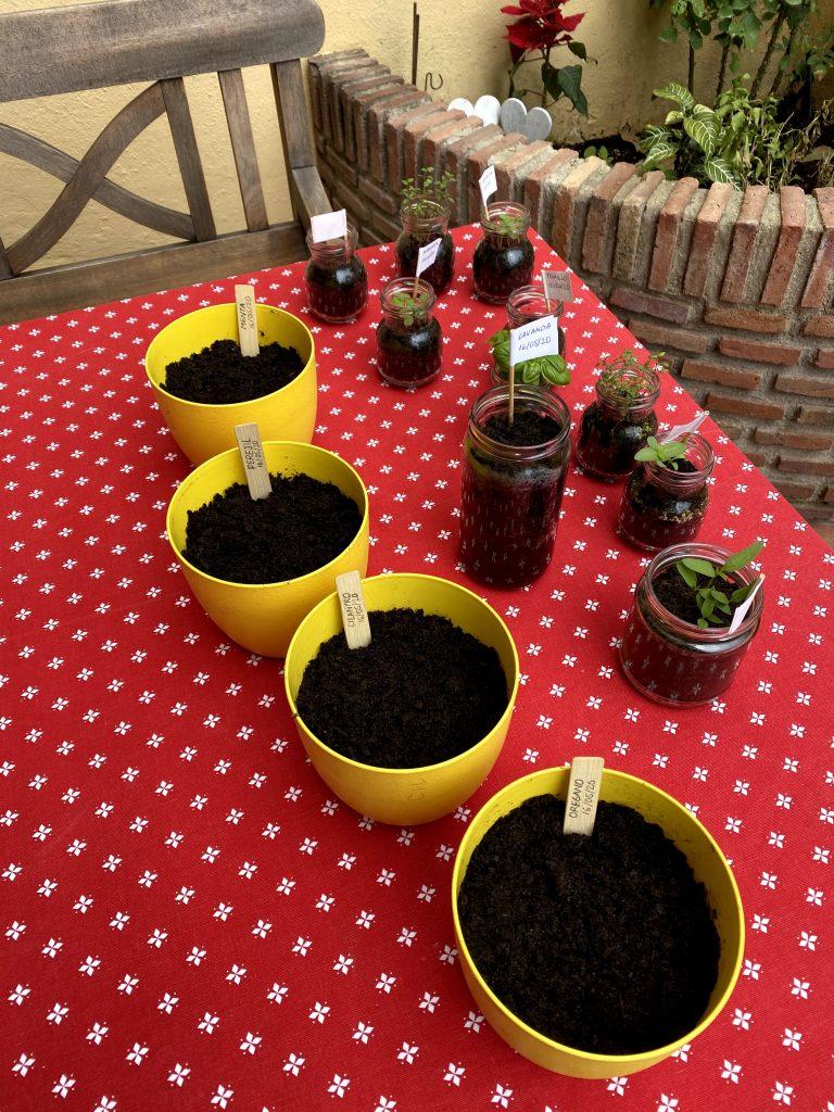 plantando semillas durante el confinamiento